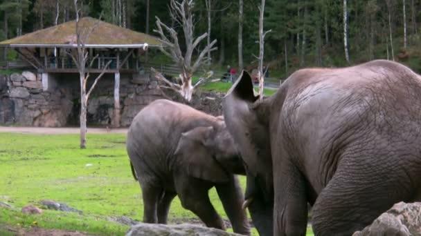 Elefánt és borjú 1