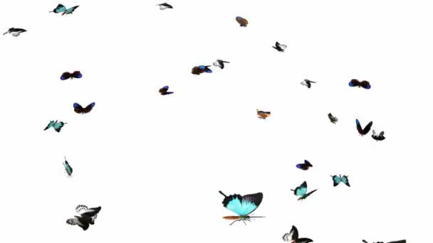 Looping Butterflies Slow Swarm Animation 2