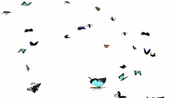 Looping Butterflies Fast Swarm Animation 2