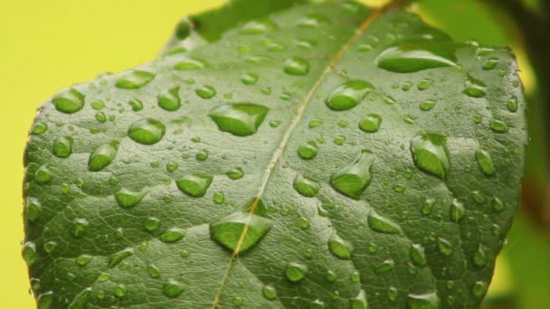 Leaves 07