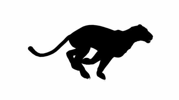 Looping Jaguar panther Leopard puma Animation with silhouette