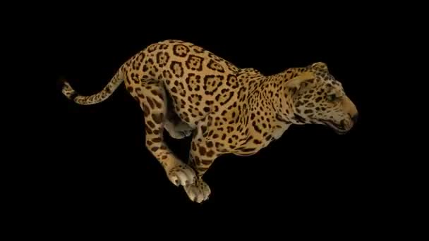 Настройка Ягуар Depositphotos_13209400-stock-video-photo-realistic-looping-jaguar-animation