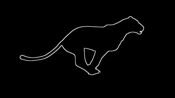 Looping Jaguar panther Leopard puma Animation with silhouette outline