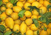 Fotografia Sfondi di limoni maturi dal giallo di Sicilia eccellente per fare l