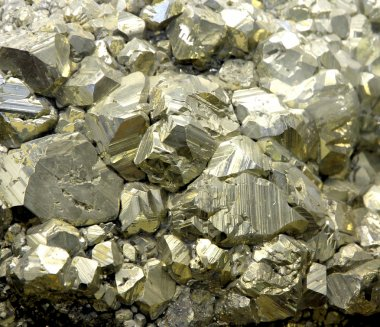 Rock with mineral PYRITE crystals or gold just found by Geologis