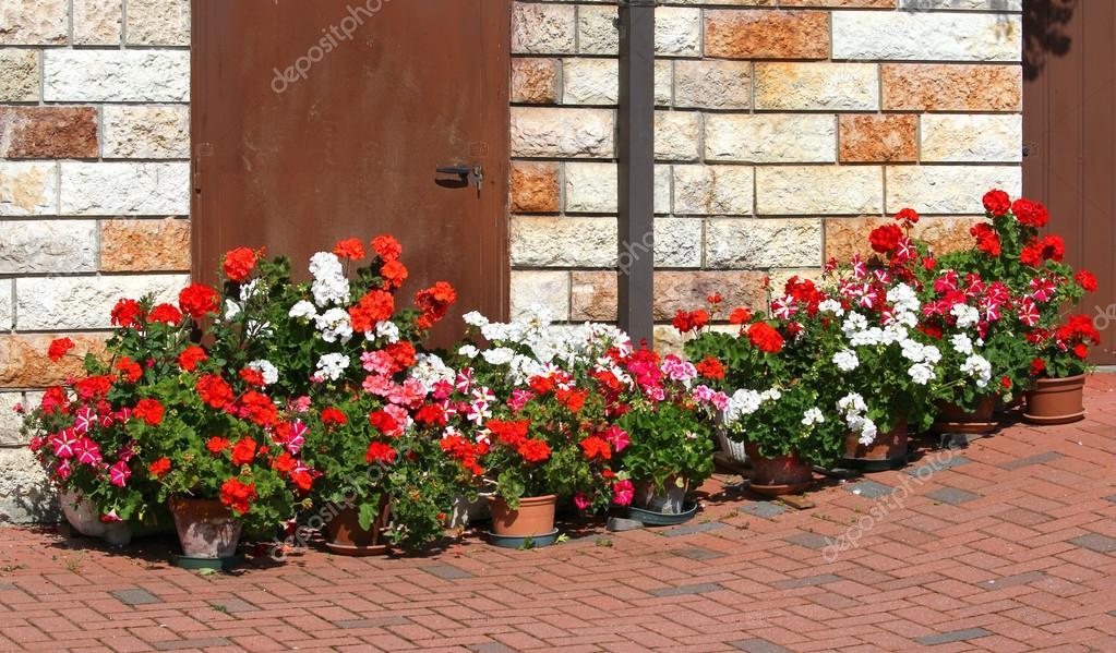 bella terrazza fiorita con vasi di gerani in fiore 6 — Foto Stock ...