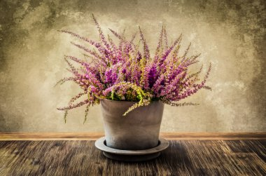 Post-process painting of nice heather flower in pot