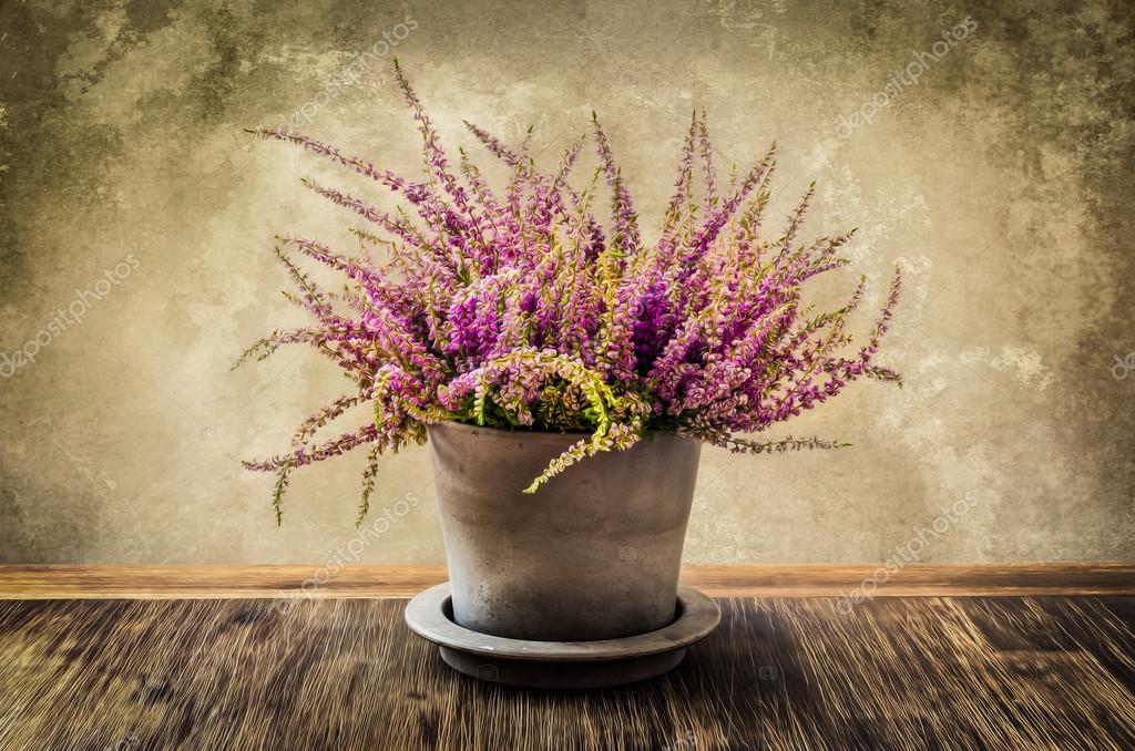 Post Traitement Des Peinture De Belle Fleur Bruyere En Pot