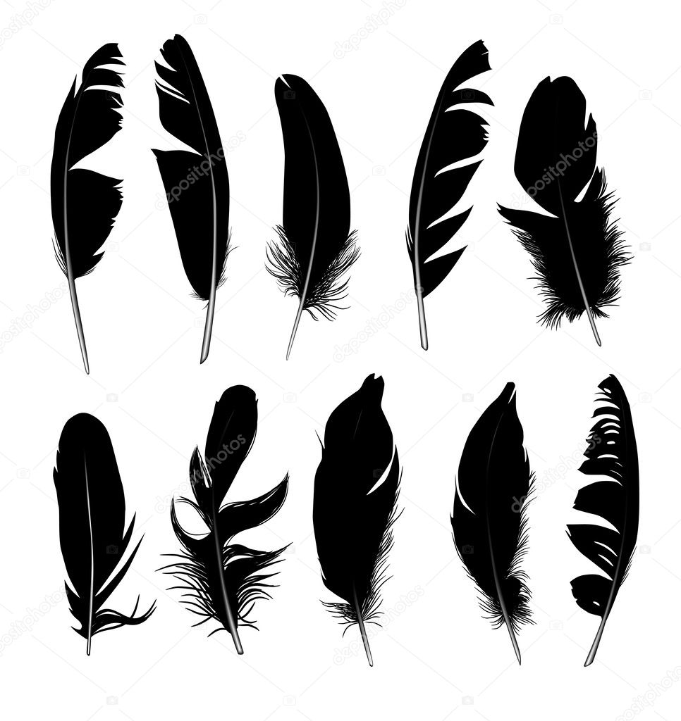 set of black isolated feathers on white background
