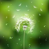 Fotografie zelené pozadí abstraktní s Pampeliška květin