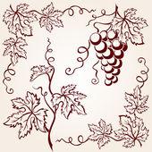Fotografie Set from vine