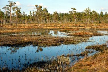 Swedish swamp