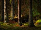 Fotografie Les v kouzelné večerní světlo