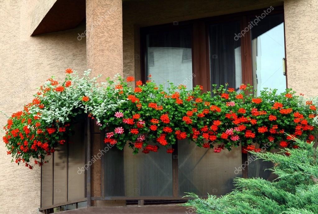 Rot Geranium Blumen Auf Balkon Als Blumenschmuck Stockfoto C Manka