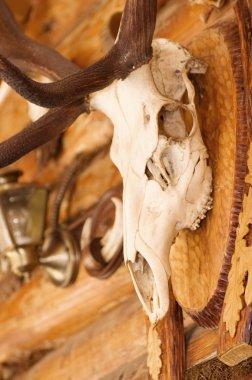 Bull skull decoration