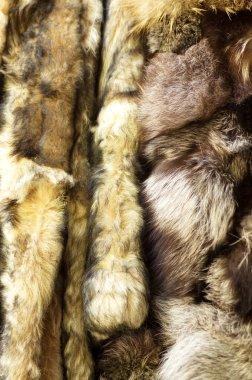 Closeup of beautiful fur stock vector