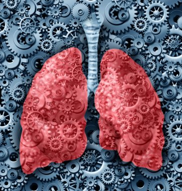 Human lungs Function
