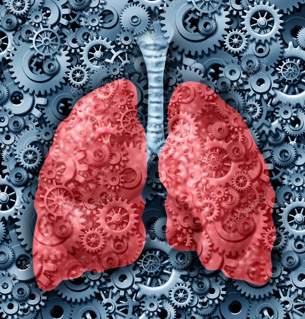 Human Lungs Function Stock Photo Lightsource 12716516