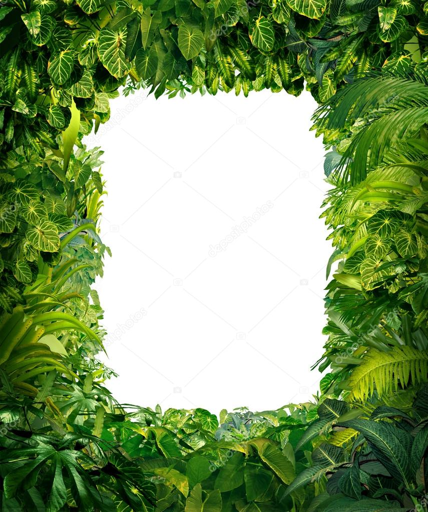 Jungle Border