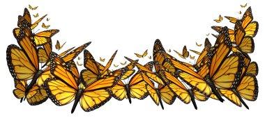 Buttefly Border