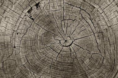 Tree Rings