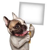 Fotografia cane toro con un cartello