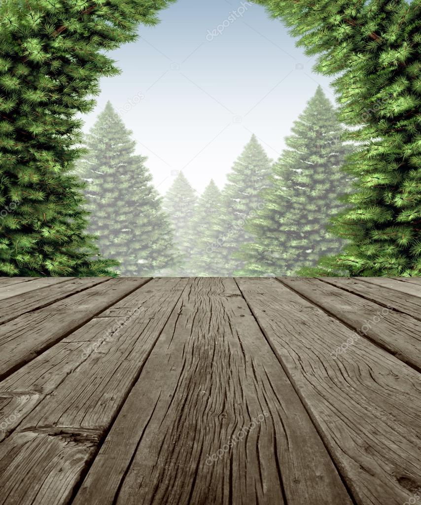 Marco de cubierta forestal de invierno — Foto de stock © lightsource ...