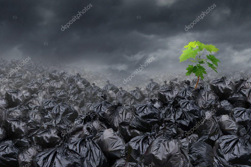 Environmental Hope