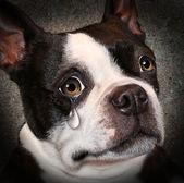 Fotografie verlorenes Haustier