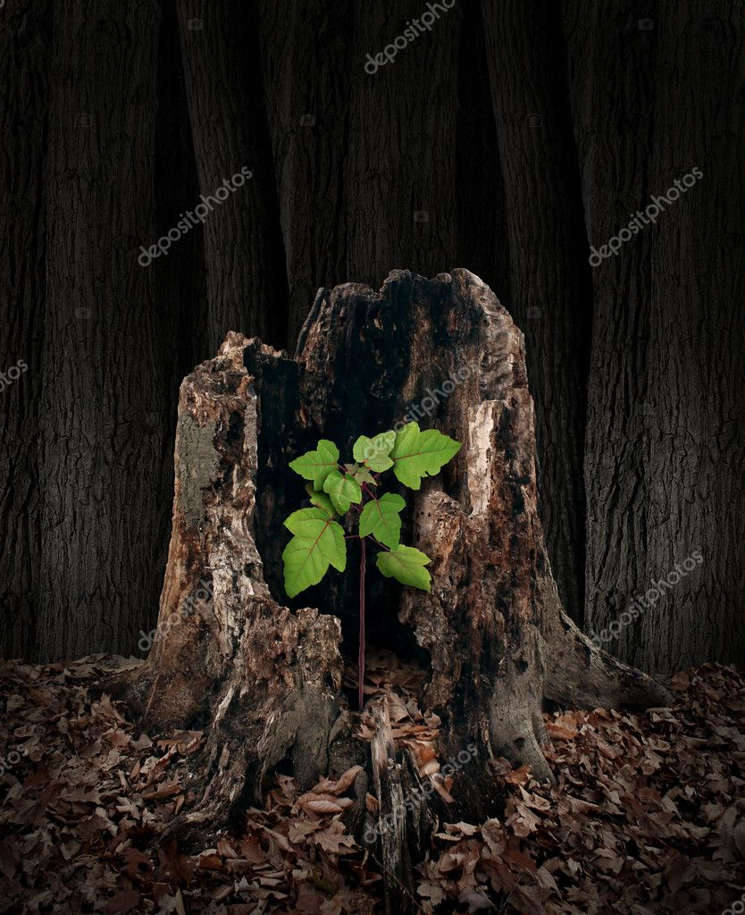 New development and renewal concept as a hollow old rotting tree stump with a growing green sapling emerging and replacing the past as metaphor for revival in business and in life and a symbol of hope with a vibrant  future. stock vector