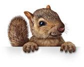 Fotografie Cute Squirrel