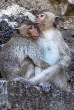 """Картина, постер, плакат, фотообои """"две обезьяны"""", артикул 50986447"""