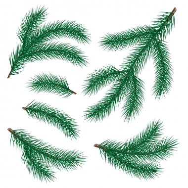 Set of fir branch