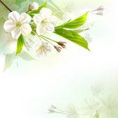 Fotografie Blühender Baum-Zweig mit weißen Blüten