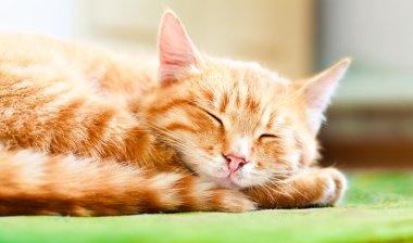 Pretty cat sleep