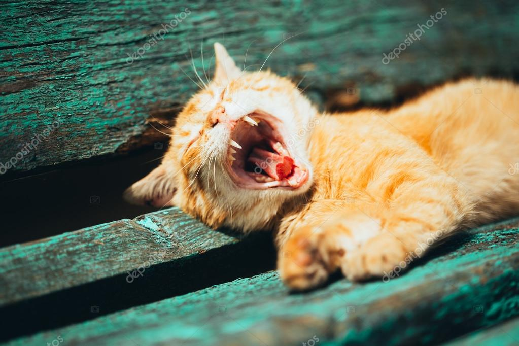 Red kitten cat sleeps on a bench in park
