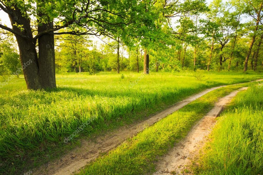 Route chemin voie voie dans la for t verte de l 39 t for Dans cette voie