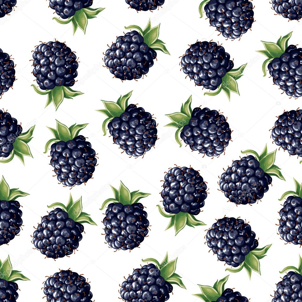 Blackberry seamless pattern