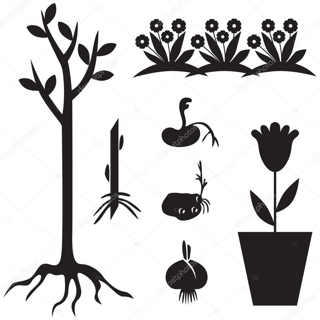 Garden seedling set