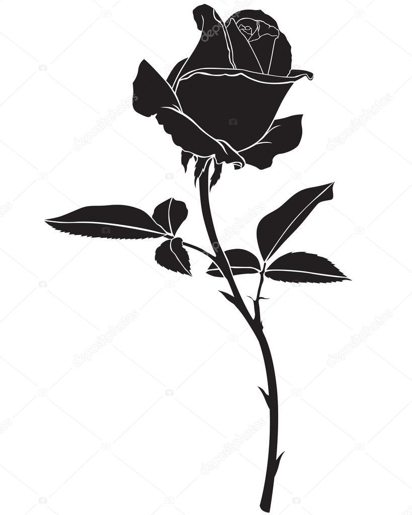 Rose Stem Stock Vectors Royalty Free Rose Stem Illustrations Depositphotos