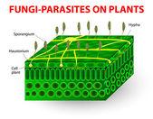 Houby paraziti na rostliny