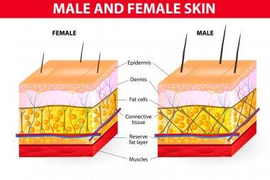 Skin male and female