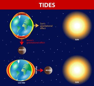 Tides. Vector diagram.