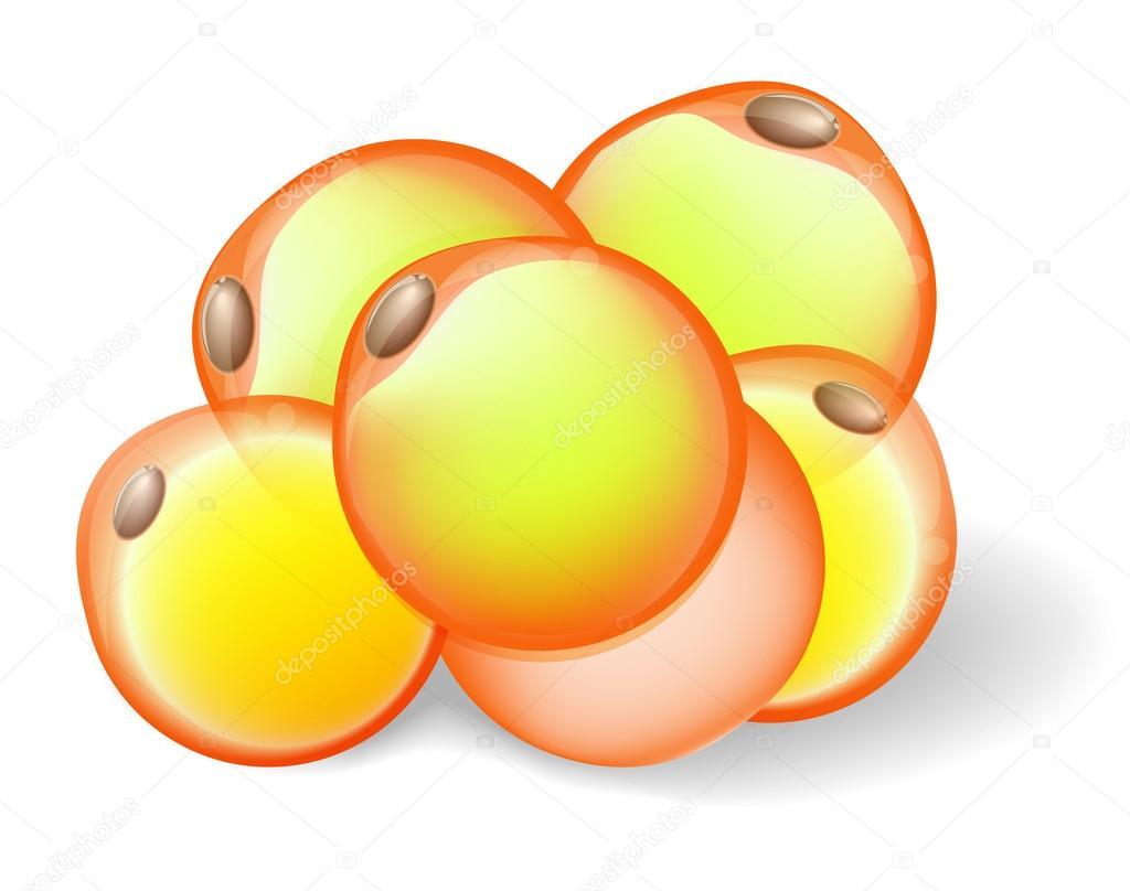 células de grasa — Archivo Imágenes Vectoriales © edesignua #45242881