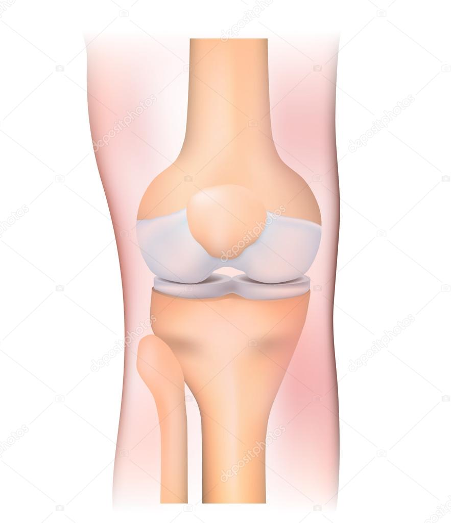 Knee joint — Stock Vector © edesignua #50859891