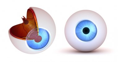 Eye anatomy - inner structure and front view, isolated stock vector