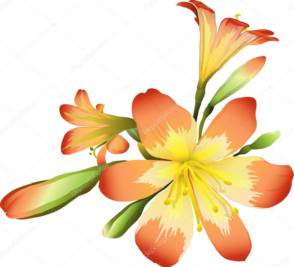 Flowers freesia
