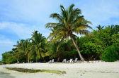 Fotografie Sandstrand mit Kokospalmen Indischer Ozean Malediven