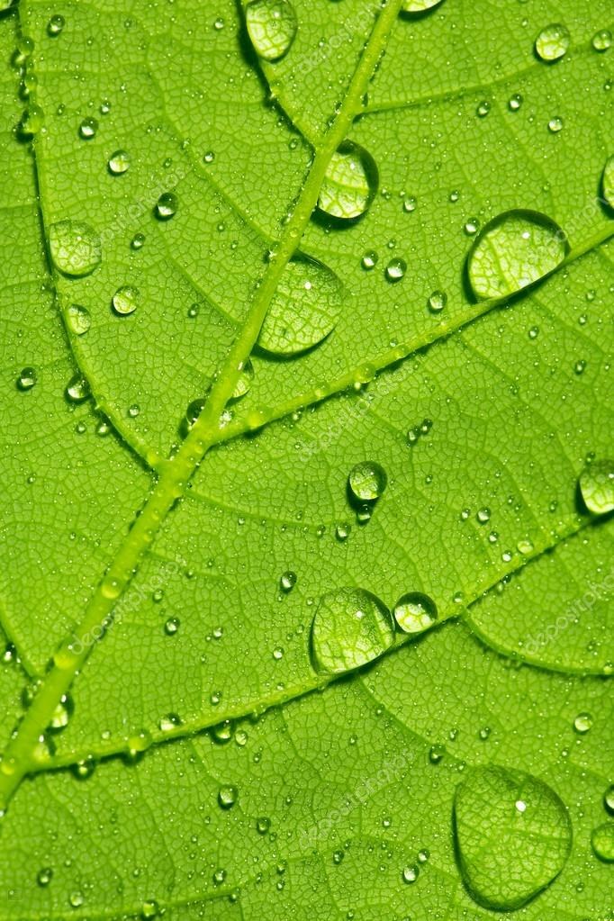 Water drop dew drop leaf lotuseffekt plant veins spring leaf surface macro network