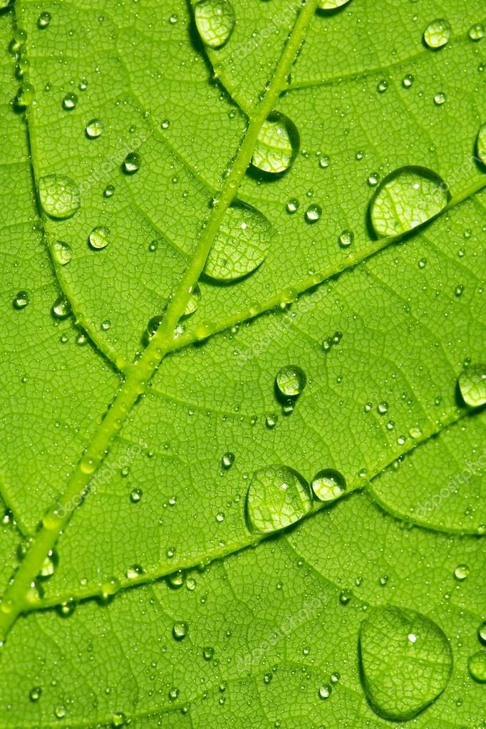 Water drop dew drop leaf lotuseffekt plant veins spring leaf surface macro network